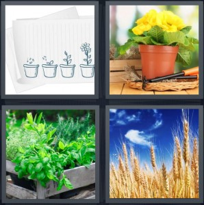 4 Pics 1 Word Answer 6 letters for drawing showing growth, yellow flowers in small pot, herb garden green in flowerbed, wheat field and blue sky