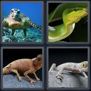 4 Pics 1 Word Answer 7 letters for turtle swimming undersea, green snake with blue tongue, brown iguana on rock, camouflage lizard on grey stone