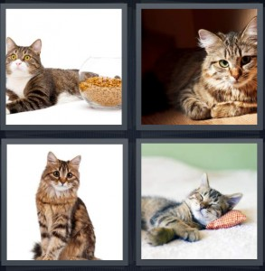 4 Pics 1 Word Answer 5 letters for cat looking at camera, kitten relaxing, feline pet, kitten taking a nap on white carpet