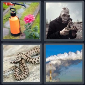 4 Pics 1 Word Answer 5 letters for pesticide being sprayed on pink flower, man wearing gasmask after war or explosion, snake coiled with black patterns, smoke from factory as pollution