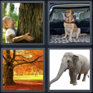 4 Pics 1 Word Answer 5 letters for child hugging tree looking up, dog in back of car, tree with long branches in autumn gold leaves, large elephant on white background