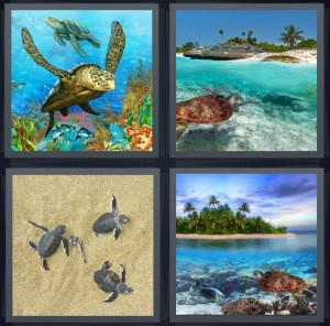 4 Pics 1 Word Answer 6 letters for sea creature with shell, Galapagos islands with creature, reptiles swimming in ocean, reptile in ocean with palm trees