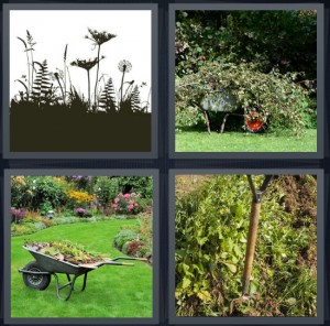 4 Pics 1 Word Answer 5 letters for plants coming from ground, branches taken down, wheelbarrow in yard with flowers, garden with shovel