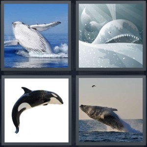 4 Pics 1 Word Answer 5 letters for ocean mammal large fin in water, Jonah the animal in the water with teeth, free Willie Sea World animal, ocean animal leaping from water