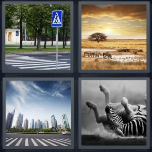 4 Pics 1 Word Answer 5 letters for crosswalk with striped paint, desert scene with yellow sky, city skyline behind road with crosswalk, black and white animal falling down