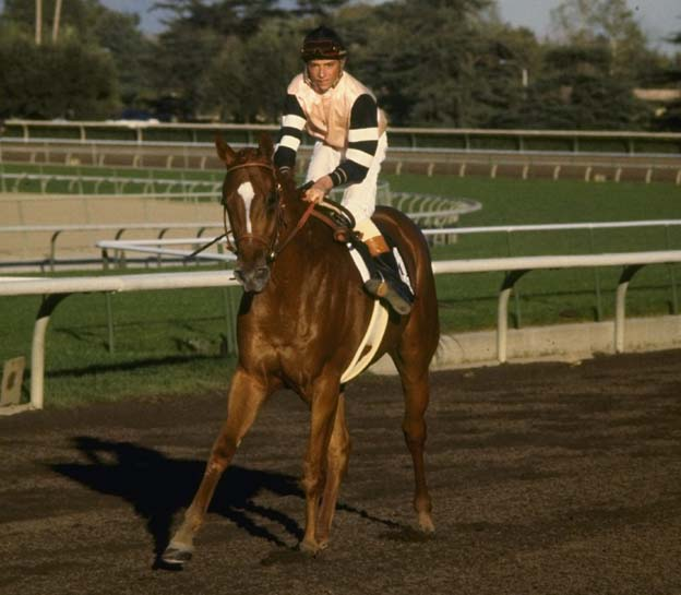 Steve Cauthen of the USA on 1978 Triple Crown winner, Affirmed, at a racecourse.