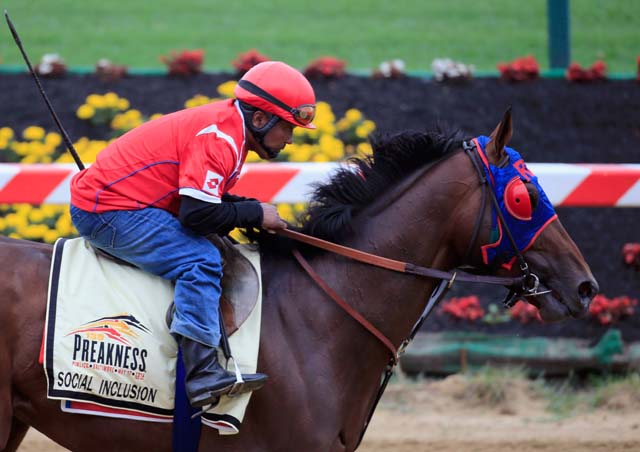 Domingo Navarro takes Social Inclusion over the track in preparation for the 139th Preakness Stakes at Pimlico Race Course on May 14, 2014.  (Getty)