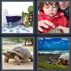 4 Pics 1 Word Answer 8 letters for cartoon of turtle cleaning, kid with turtle touching shell, large turtle outside, turtle at beach with large shell