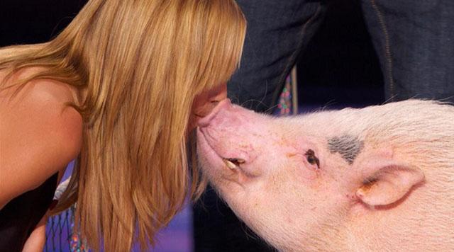 heidi kisses pig