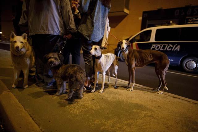 Animal Rights activists  Spain Ebola