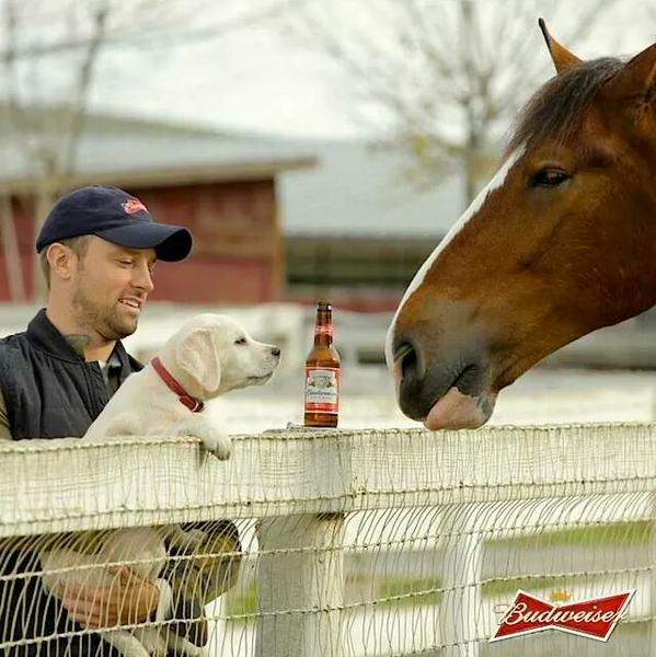 Don Jeanes, Budweiser puppy commercial