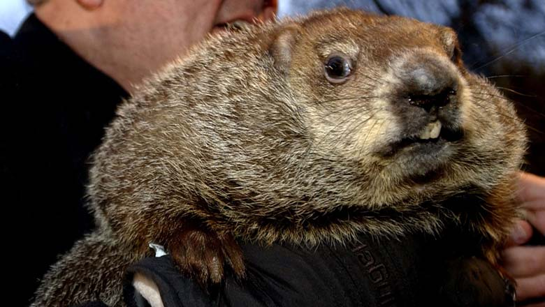 Punxsutawney Phil, groundhog day, facts