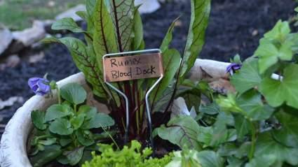 Bosmere Copper Plate Metal Marker, 20-Pack , best urban garden supplies, urban gardening plant marker for sale