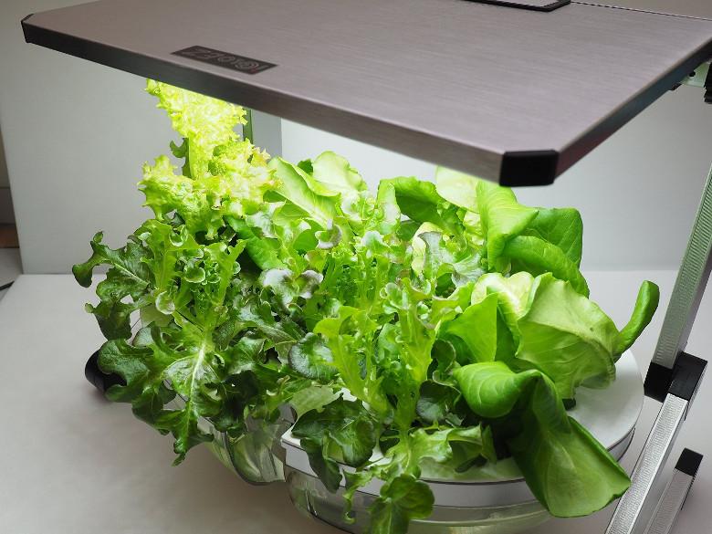 iGloEZ High Efficiency Green Energy Full Spectrum SMD LED Plant Grow Light, hydroponics grow tent LED light, best full spectrum led light for sale