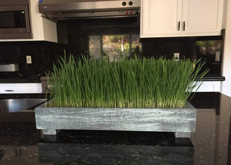 Planter Pro's Complete Organic Wheatgrass Kit