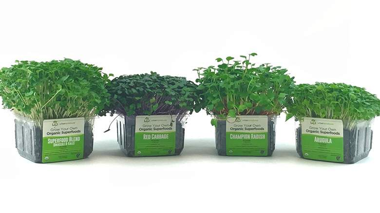 Organic Microgreen Growing Kit - Value 4-Pack, Non-GMO, Nutrient Rich, Ready to eat in 5-7 days