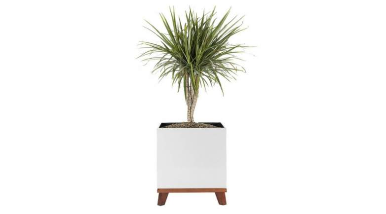 image of white and wood planter with ficus tree