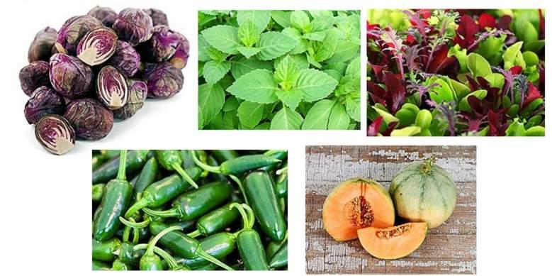 harley seeds, non gmo organic heirloom vegetable seeds