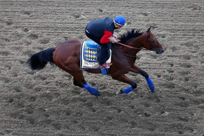American Pharoah is the favorite for Saturday's Preakness. (Getty)