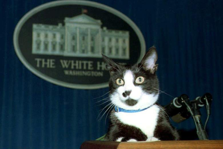 Socks, the White House cat (Getty)