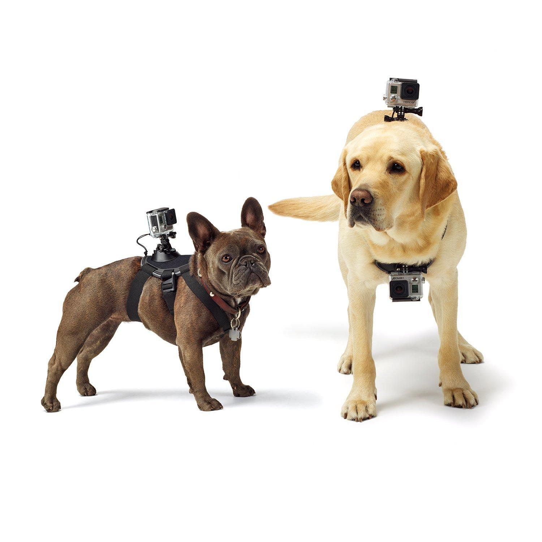 gopro mount, gopro mounts, gopro headstrap mount, gopro for dogs, gopro dog mount