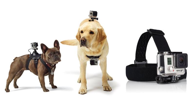 gopro mounts, gopro fetch, gopro dog mount, gopro mount, gopro headstrap mount, gopro chest mount, gopro underwater mount, gopro bike mount