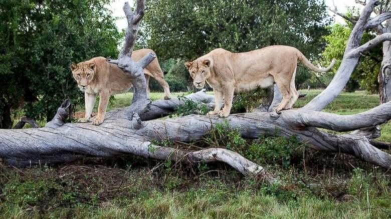 HT_lion_park_sk_150601_16x9_992