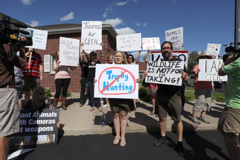 BLOOMINGTON, MN - JULY 29:  Protesters call attention to the alleged poaching of Cecil the lion in the parking lot of Dr. Walter Palmer's River Bluff Dental Clinic on July 29, 2015 in Bloomington, Minnesota. According to reports, the 13-year-old lion was lured out of a national park in Zimbabwe and killed by Dr. Palmer, who had paid at least $50,000 for the hunt. (Photo by Adam Bettcher/Getty Images)
