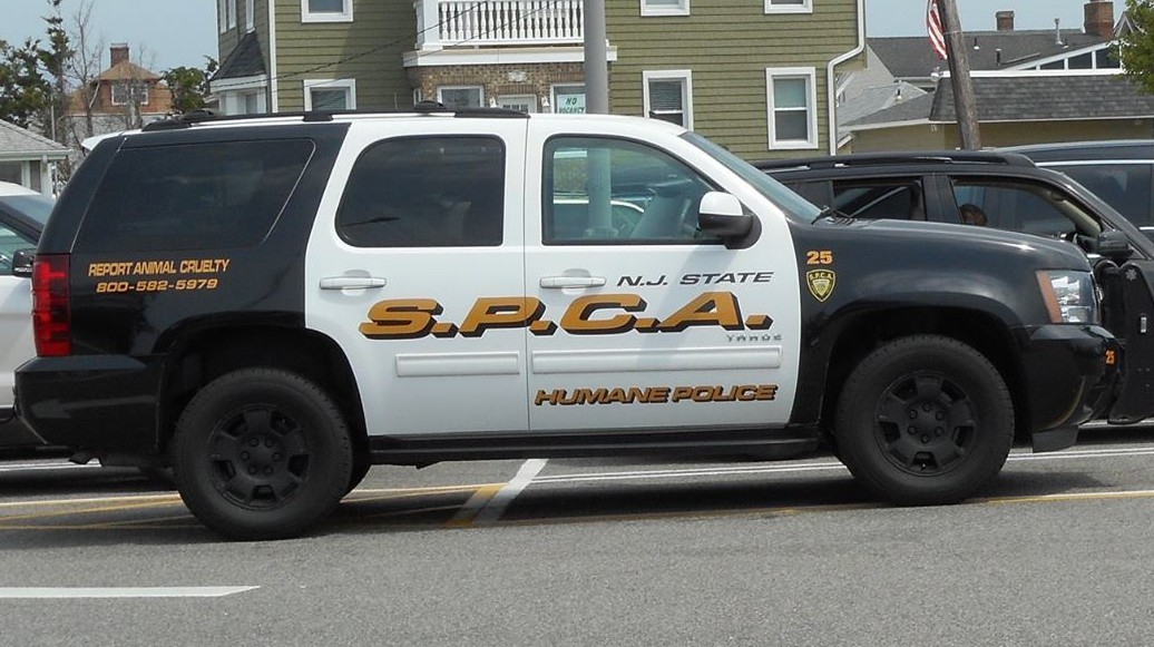 Michelle Wankoff, Tyler Phernamucq, new jersey woman killed dog