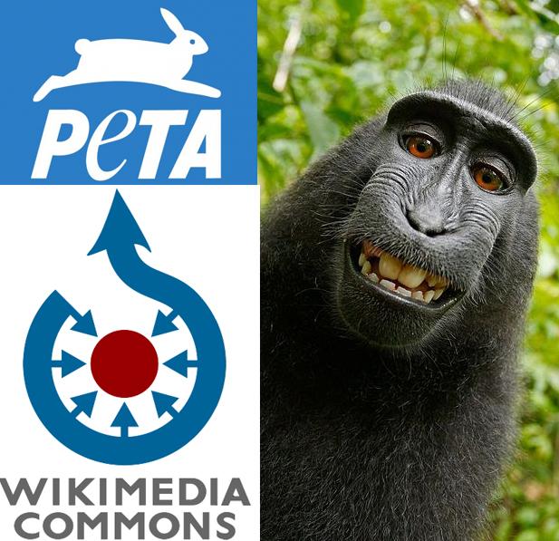 naruto peta, peta monkey selfie lawsuit