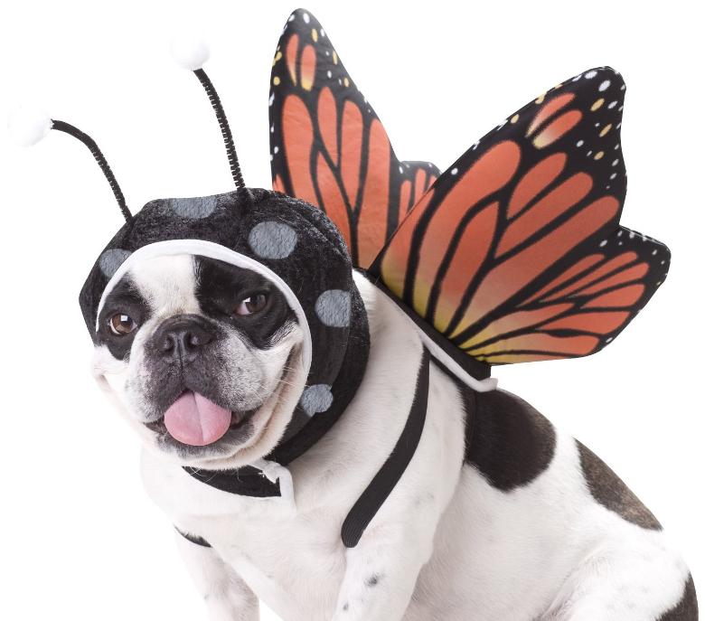 dog halloween costumes, dog costumes, pet halloween costumes