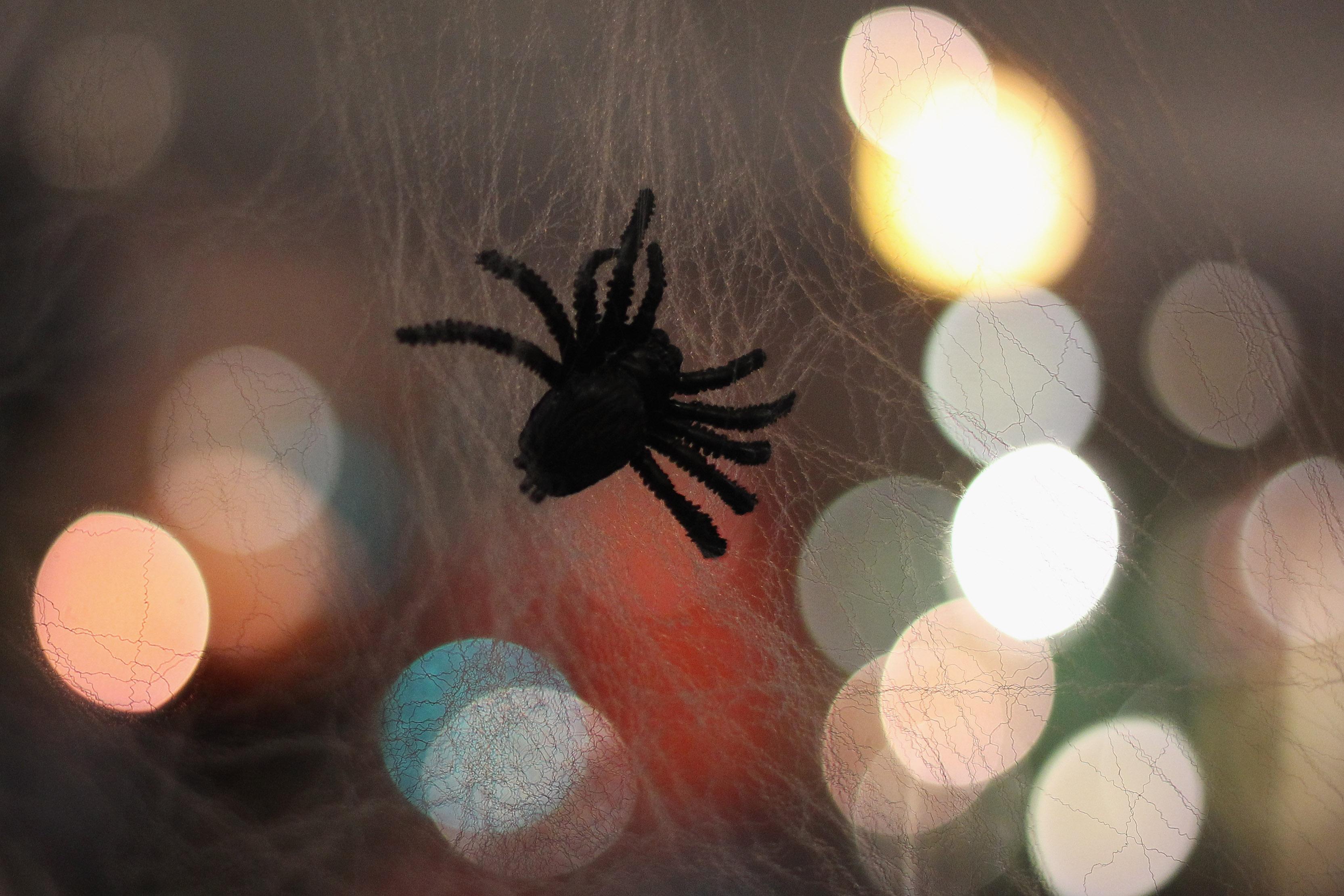 A fake spider Halloween decoration. (Getty)