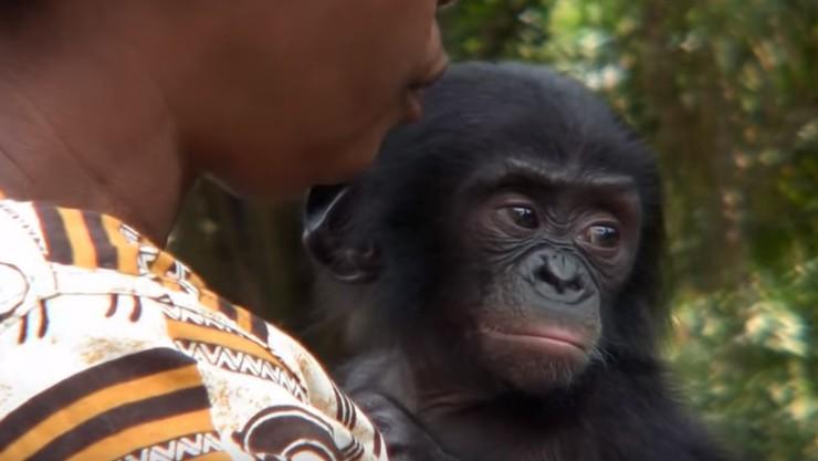 bonobo, lola ya bonobo, adopt a bonobo