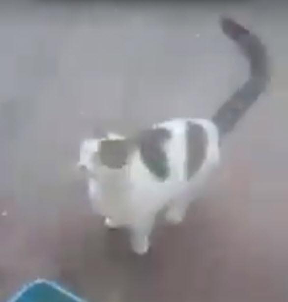 north carolina cat video, man dumps hot water on cat