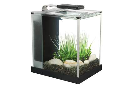 Image of fluval spec III fish tank