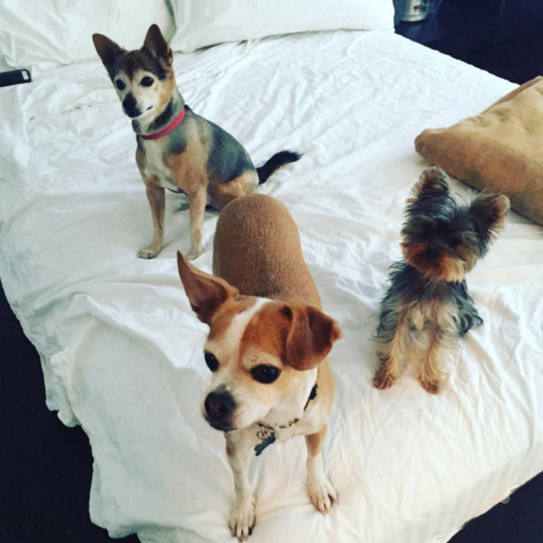 josh altman and heather bilyeu pets, josh altman and heather bilyeu dogs