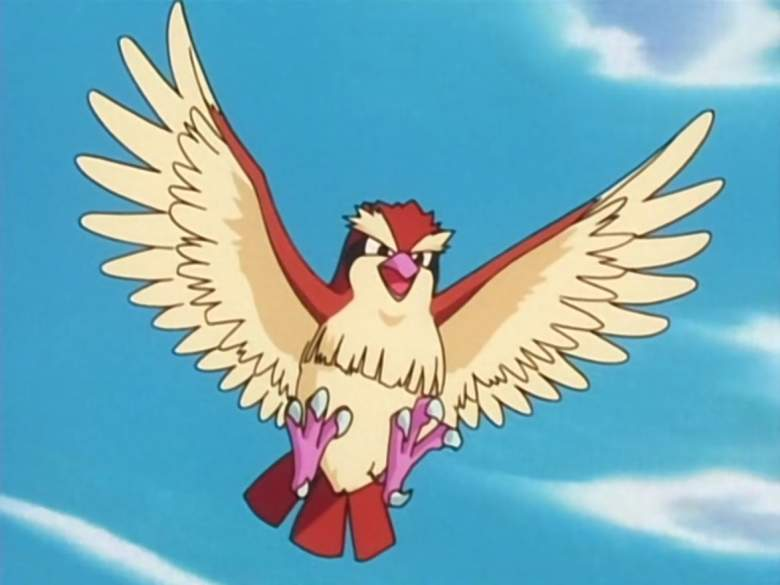 Pokemon Pidgey, Pokemon Go Pidgey, Pokemon Pidgey evolution