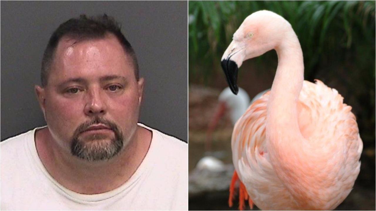 joseph corrao, joseph anthony corrao, joseph corrao orlando, joseph corrao busch gardens, joseph anthony corrao busch gardens, joseph anthony corrao flamingo, pinky the flamingo, pinky busch gardens flamingo