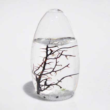 EcoSphere Closed Aquatic Ecosystem , best stocking stuffer