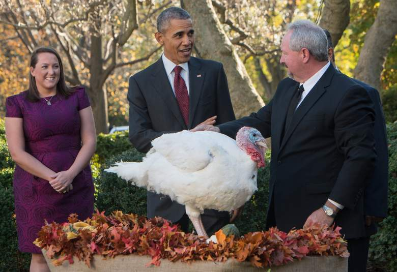Obama turkey pardon ceremony, turkey pardon, national turkey