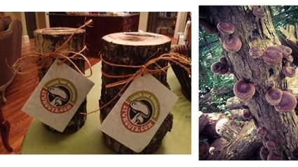 Mushroom Log DIY Shiitake Mushrooms Ready to Grow Your Own, creative gift