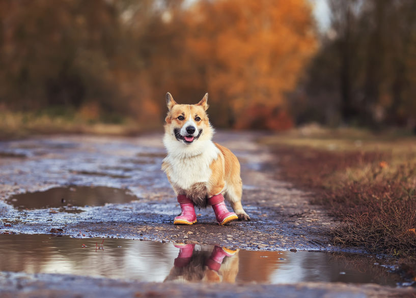 11 Best Dog Boots Paw Protection
