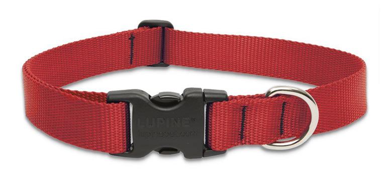 LupinePet dog collar puppy essentials