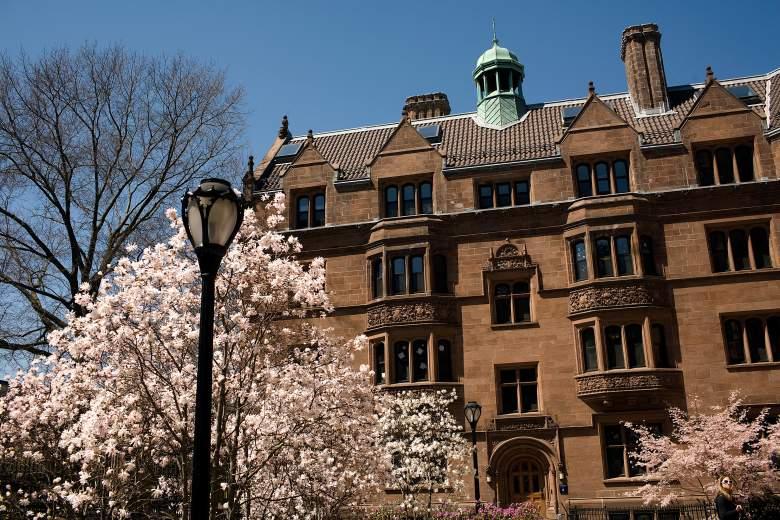 Yale campus, Yale trees, Yale campus photos