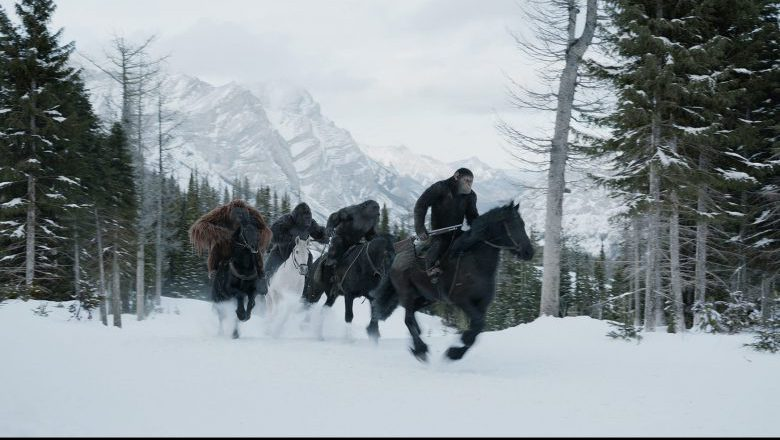 War for the Planet of the Apes, War for the Planet of the Apes stills, War for the Planet of the Apes images
