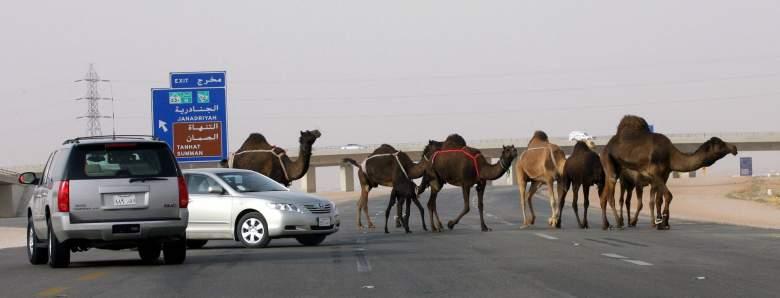 Saudi Arabia, driving