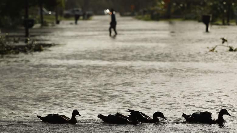 Hurricane Irma Miami, Miami Irma damages, Irma Miami aftermath, Miami hurricane damages, Miami hurricane aftermath
