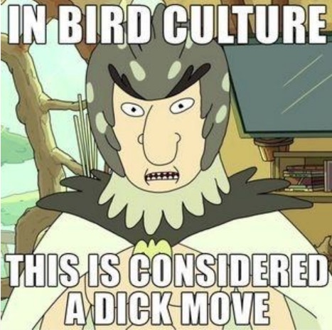 Bird Person Meme