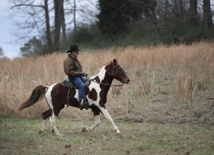 roy moore horse