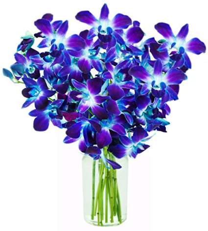 apology gift, sorry gifts, sorry gifts for her, apology flowers